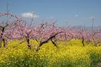 クルマでしか味わえない!辺境グルメ旅Vol.4「地元主婦がオススメ! 春の山梨・桃源郷でいただく本当のほうとうの味に驚く」