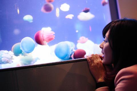 色とりどりの小さなクラゲたちに、「癒され中~」。(@新江ノ島水族館)
