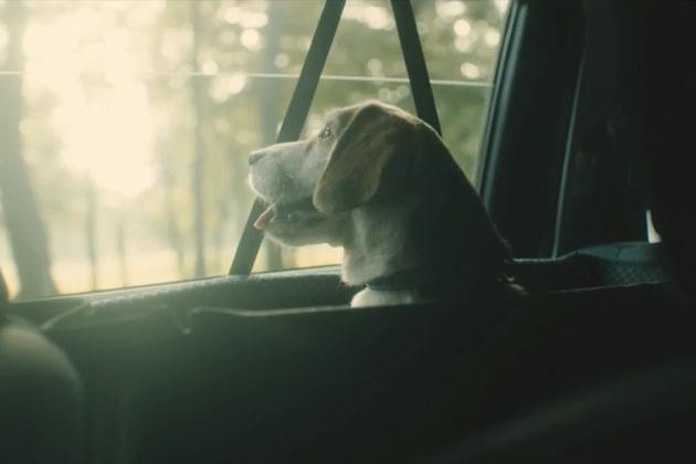 【犬好き必見!】トヨタ ドッグサークルWeb限定動画『Smile Again』公開
