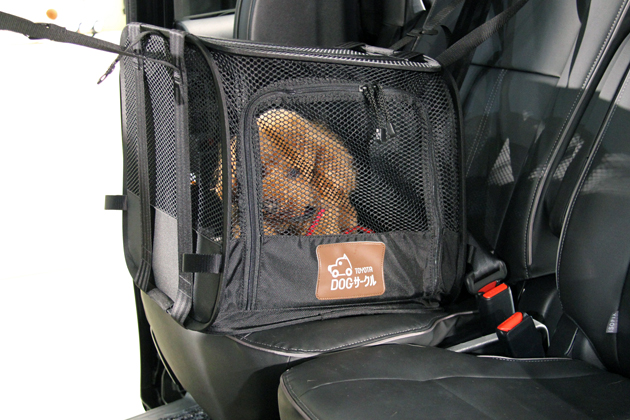 キャンピングカー旅行に連れて行くなら、犬?ネコ?どっち?