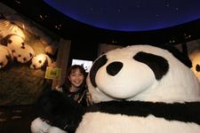 パンダがたくさん 大世界ミュージアム