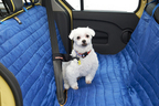 ペットとのクルマ移動も快適・安心!ルノーカングーに獣医師監修の限定車が登場