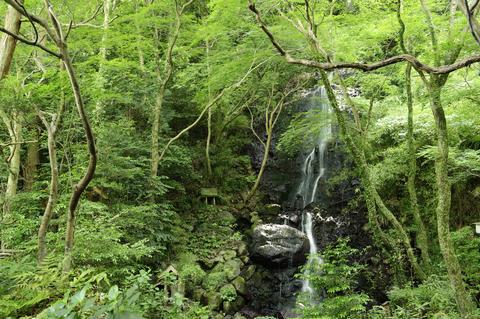 庭園では木々に囲まれた滝を見ることも・・・まさにプライベート・ウォーターフォール。
